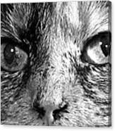 Bailey 1 Black And White Canvas Print