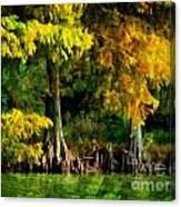 Bald Cypress 2 - Digital Effect Canvas Print