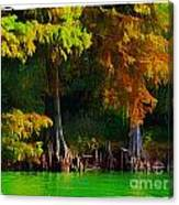Bald Cypress 3 - Digital Effect Canvas Print