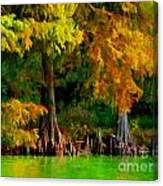 Bald Cypress 4 - Digital Effect Canvas Print