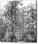 Bald Cypress Swamp In Black And White Canvas Print