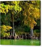 Bald Cypress Trees 1 - Digital Effect Canvas Print