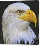 Bald Eagle 2 Canvas Print
