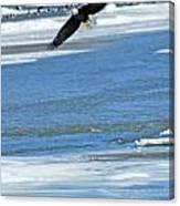 Bald Eagle 2832 Canvas Print