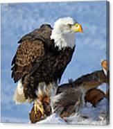 Bald Eagle And Carcass Canvas Print