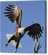 Bald Eagle Ascent 3 Canvas Print