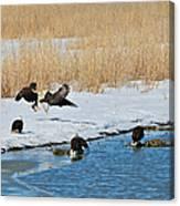 Bald Eagle Battle Canvas Print