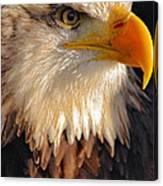 Bald Eagle Close-up Canvas Print