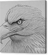 Bald Eagle Drawing Canvas Print
