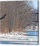 Bald Eagle Fledgling Near Ludwig Mill 2576 Canvas Print