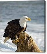 Bald Eagle Homer Spit Alaska Canvas Print