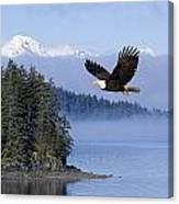 Bald Eagle In Flight Over The Inside Canvas Print