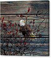 Bald Eagle On Barnwood Canvas Print