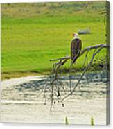 Bald Eagle Overlooking Yellowstone River Canvas Print