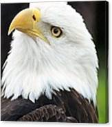 Bald Eagle - Power And Poise 01 Canvas Print