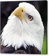 Bald Eagle - Power And Poise 03 Canvas Print