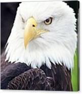 Bald Eagle - Power And Poise 04 Canvas Print