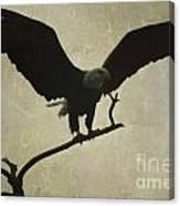 Bald Eagle Texture Canvas Print