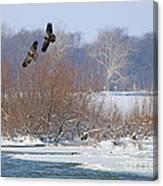 Bald Eagles At Providence Dam 1107 Canvas Print