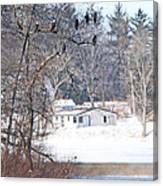 Bald Eagles In Tree In Grand Rapids Ohio 3996 Canvas Print