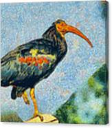 Bald Ibis Canvas Print