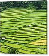 Bali Indonesia Rice Fields Canvas Print