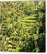Bali Sayan Rice Terraces Canvas Print