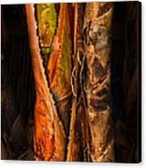 Balk Of Palm Tree Canvas Print