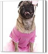 Ballerina Pug Dog Canvas Print