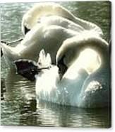 Ballet Of Swans  Canvas Print
