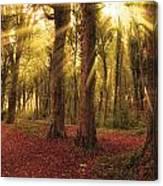 Ballyannan Wood Canvas Print