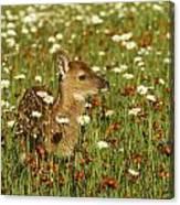 Bambi 2 Canvas Print