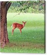 Bambi Days Canvas Print