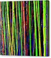Bamboo Dream Canvas Print