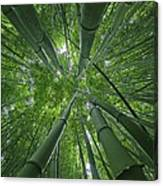 Bamboo Forest 1 Canvas Print