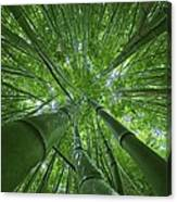 Bamboo Forest 2 Canvas Print