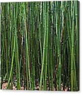 Bamboo Forest 3 Canvas Print