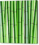 Bamboo Forest Background 2 Canvas Print