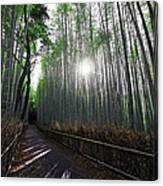 Bamboo Forest Path Of Kyoto Canvas Print