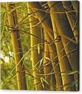 Bamboo Gold Canvas Print