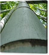 Bamboo Grove In Morning Canvas Print