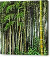 Bamboo Hill Canvas Print