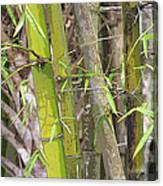 Bamboo I Poster Look Canvas Print