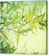 Bamboo In The Sun Canvas Print