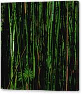 Bamboo Canvas Print