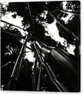 Bamboo Skies 3 Canvas Print