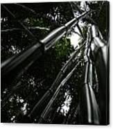 Bamboo Skies 4 Canvas Print