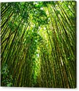 Bamboo Sky - The Magical And Mysterious Bamboo Forest Of Maui. Canvas Print
