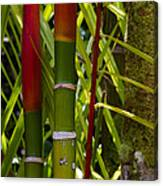 Bamboo Too All Profits Go To Hospice Of The Calumet Area Canvas Print