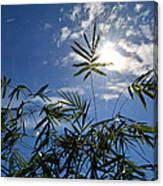 Bamboo Under The Sun Canvas Print